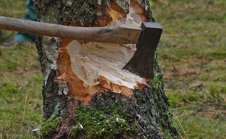 Cut Tree 1716671 640